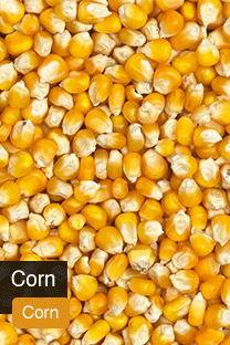 Product Corn Yellowrock